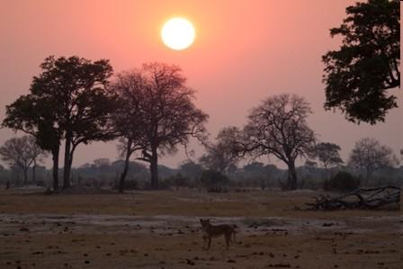 afrika und mehr
